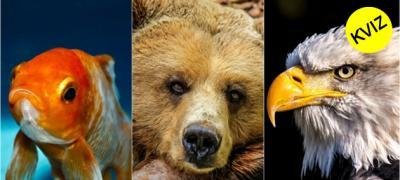 Kviz: U koju životinju ćete se reinkarnirati u sledećem životu?