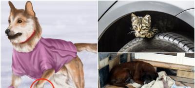 Kako da pomognete kućnim ljubimcima i životinjama beskućnicima da lakše prežive zimu?
