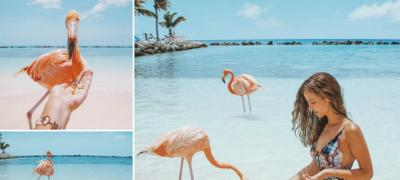 Plaža na kojoj možete maziti flaminga (foto)