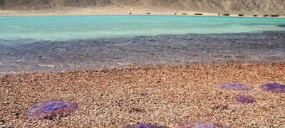 Маpa svih grčkih plaža na kojima su se pojavile meduze