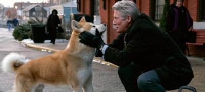 5 najboljih filmova sa psima u glavnim ulogama