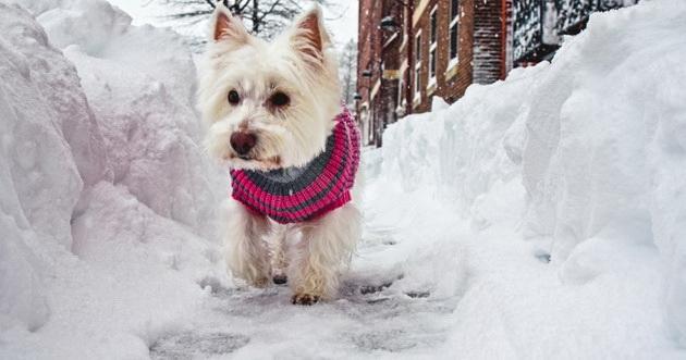 kako-da-pomognete-kucnim-ljubimcima-i-zivotinjama-beskucnicima-da-lakse-prezive-zimu-03.jpg