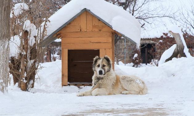 kako-da-pomognete-kucnim-ljubimcima-i-zivotinjama-beskucnicima-da-lakse-prezive-zimu-04.jpg