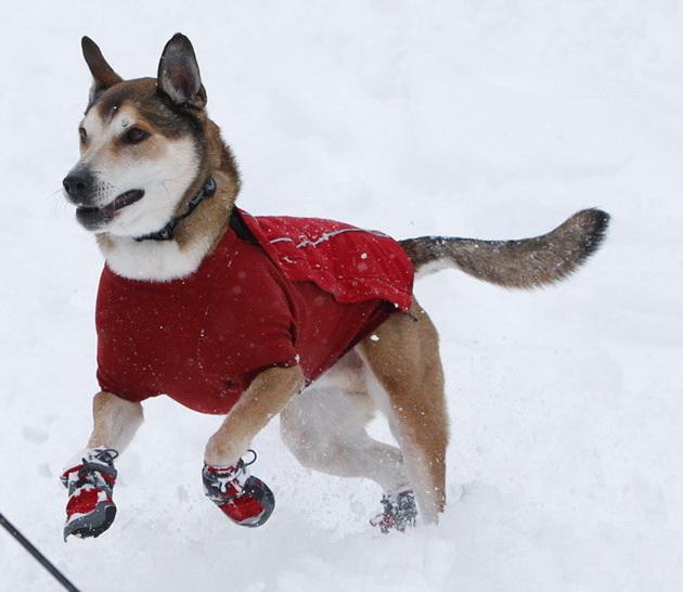 kako-da-pomognete-kucnim-ljubimcima-i-zivotinjama-beskucnicima-da-lakse-prezive-zimu-06.jpg