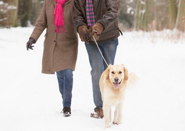 kako-da-pomognete-kucnim-ljubimcima-i-zivotinjama-beskucnicima-da-lakse-prezive-zimu-12.jpg