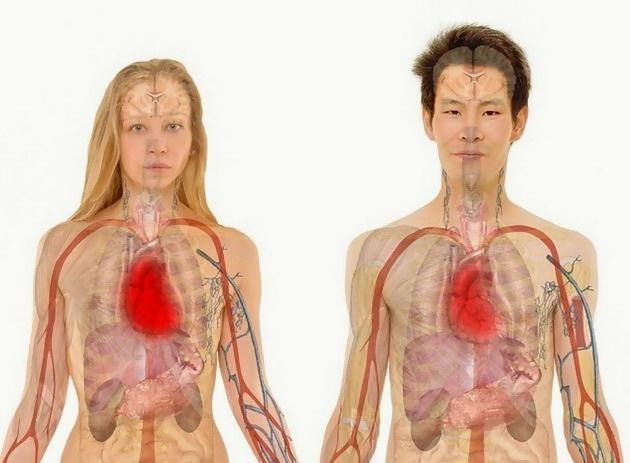 prosecna-zena-moze-da-rodi-40-dece-cinjenice-koje-dokazuju-koliko-je-neverovatno-nase-telo-11.jpg
